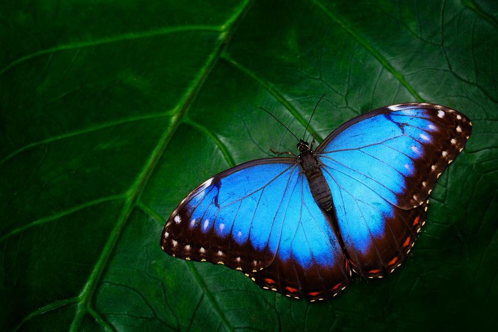 Butterfly opční strategie